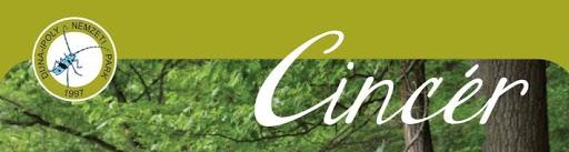 cincér